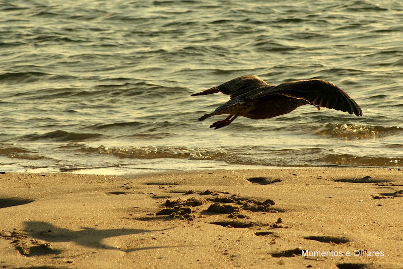O voo das gaivotas