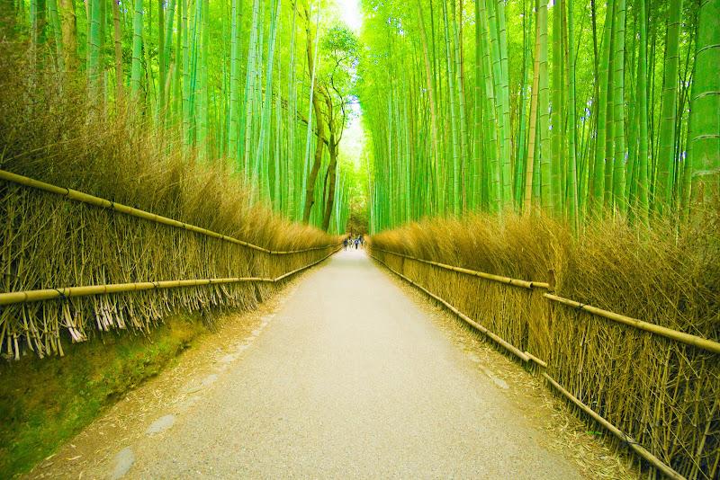 京都 竹林の道 写真1