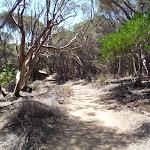 Track away from Wallagoot car park (104590)