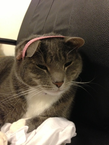 cat head band