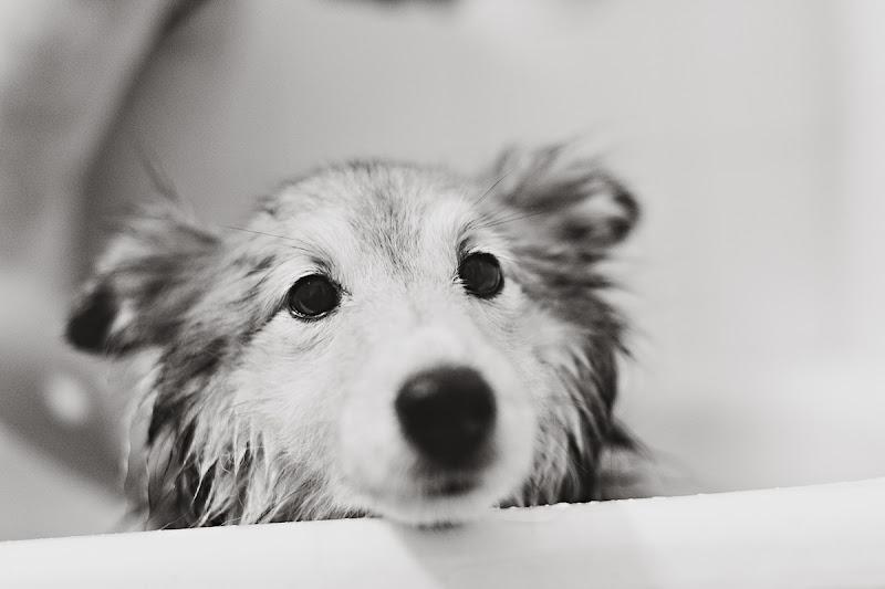 Sami i duschen