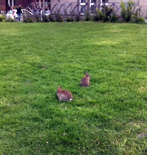 Кролики в городе