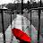 Liza Woo avatar image