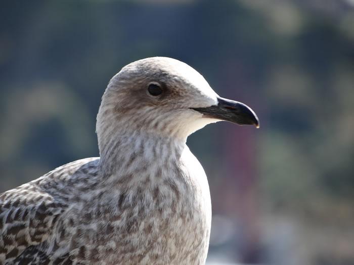 DSC01553.jpg - Les oiseaux � Saint-Malo par Bretagne-web.fr