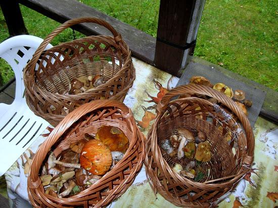 grzyby w kilku koszykach