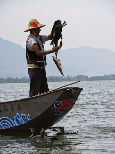 The fisherman claims the fishy prize from the cormorant bird at Erhai Lake, Dali, Yunnan