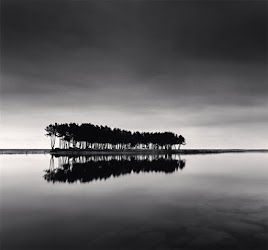 Michael Kenna - Pine Trees, Study 1, Wolcheon, Gangwondo, South Korea, 2007