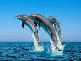 Achtergrond met dolfijnen in blauwe zee