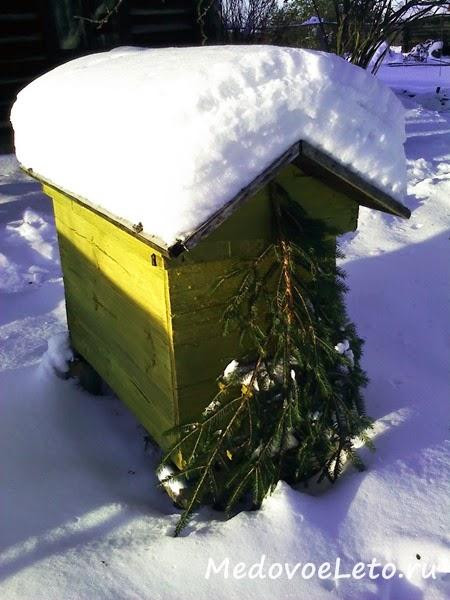 Пчёлки мои уже который год зимуют на улице