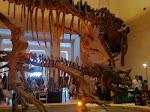 T-Rex v Triceratops.  An even match.