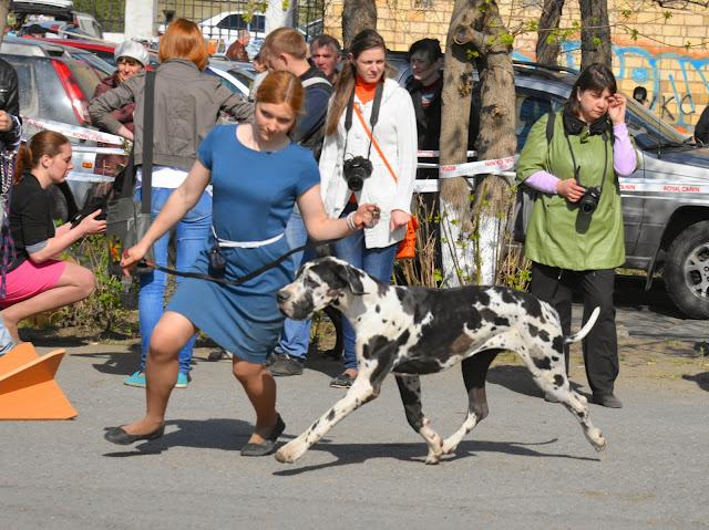 Кубок Аризоны-14(ПК)+ЧРКФ, Красноярск, 27 апреля 2014 DSC_5590