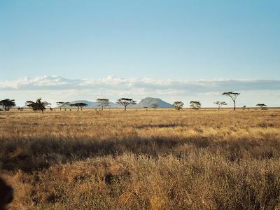 Serengeti National Park Wallpaper