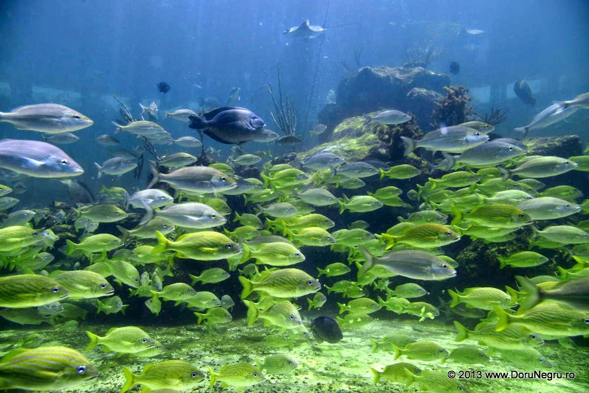 A school of fish in a tank, Miami Seaquarium