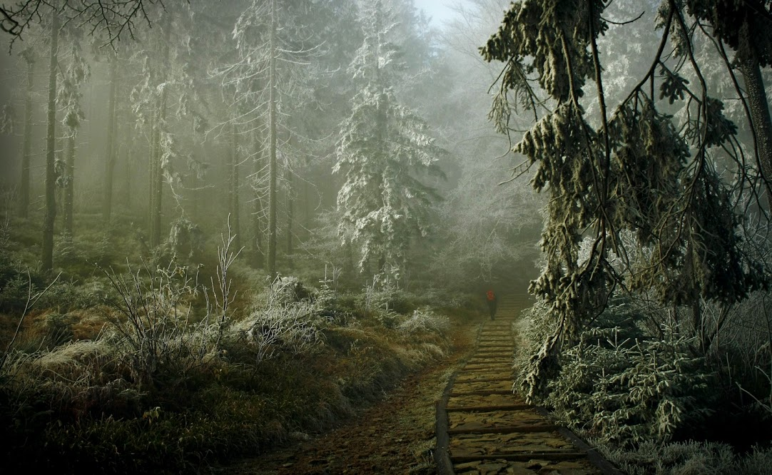 Babia Góra - szlak na Sokolicę