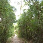 Walking through the tall heath (393371)