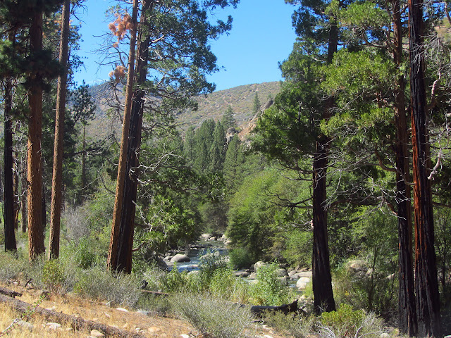 Kern River through the cedars