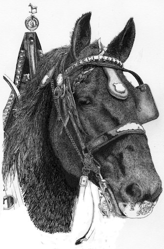 percheronpenandinkdrawing-2012-09-16-11-44.png