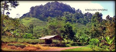 Perkebunan Teh Margawindu, Potensi Wisata di Desa Citengah