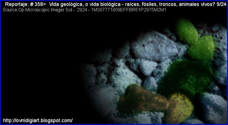 evidencia vida geológica Marte
