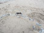 Sandburgenbau am Strand