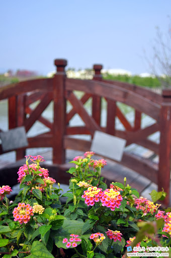 芬園花卉生產休憩園區 - 不知名的花
