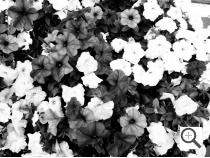 Kodak EasyShare Max Imagen de muestra