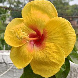 Niraj singh Rajput review