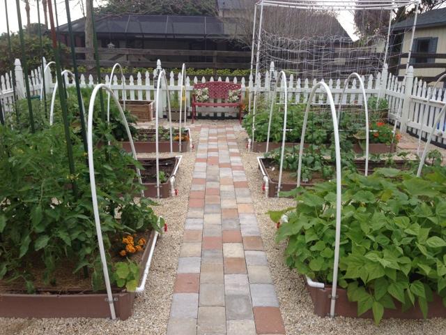 Vegetable Gardening in SW Florida