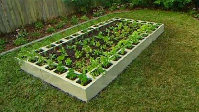 Small Budget Gardening Tips For Beginners The Anarchist