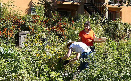 High Altitude Gardening: Sharing Backyards via Wasatch Community Gardens