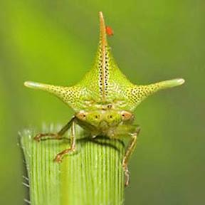 Serangga-Serangga Unik & Mengagumkan di Dunia (2/2)