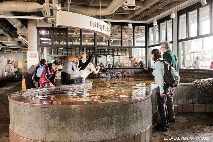 Aquarium Monterey CA
