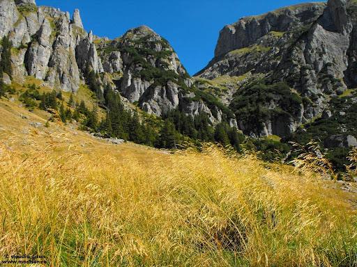 trasee marcate in Bucegi: Valea Gaura