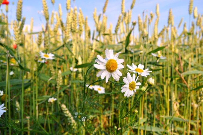Image result for hoa dại mùa xuân