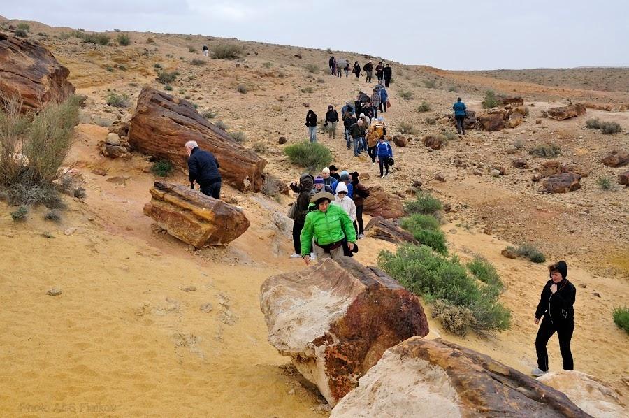 Окаменелые деревья - одно из многих чудес пустыни. Экскурсия гида Светланы Фиалковой в пустыню Негев.