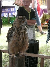 Owls on display at the exotic zoo