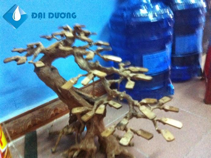Lũa bonsai hồ cá thủy sinh 7