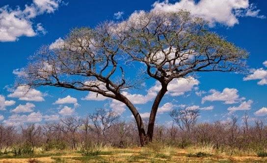 Férias em Botswana