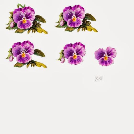 knip511.jpg