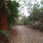 Bare Creek Track (120610)