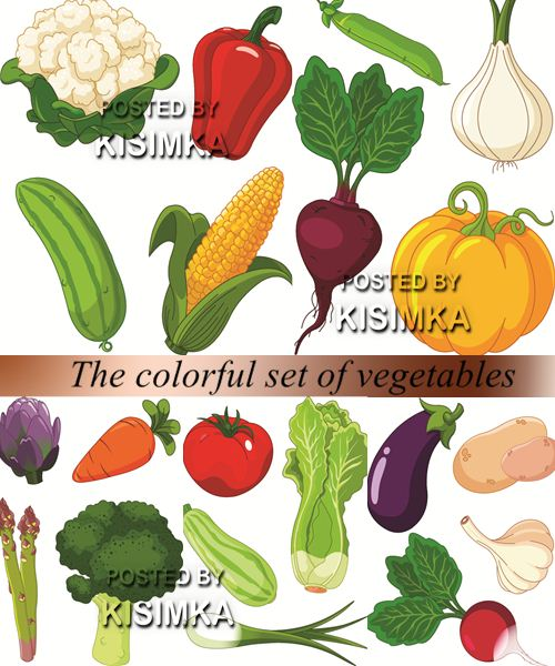 Stock: The colorful set of vegetables