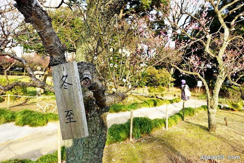 Koishikawa-Korakuen-Gardens-Tokyo-สวนญี่ปุ่น-สิ่งที่น่าสนใจในโตเกียว-เที่ยวญี่ปุ่น-เที่ยวญี่ปุ่นด้วยตัวเอง-เที่ยวโตเกียว-แนะนำที่เที่ยว โตเกียว