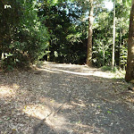 Forest trail in Blackbutt Reserve (399688)