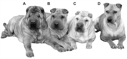 Wrinkly Dog Syndrome - Inkfish
