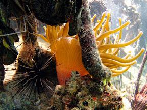 giant_anemone.jpg