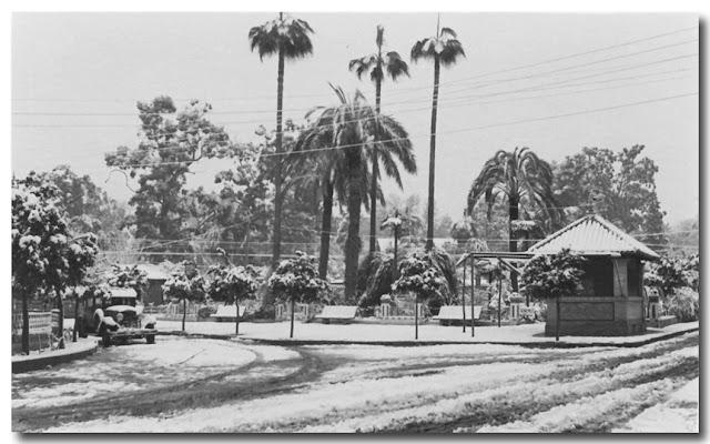 Los Jardines de la Pimienta.-Nevada en Dos Hermanas 3 de febrero de 1954
