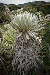 … they grow at a rate of 1 cm per year, making this one about 200 years old! Some are around 600 years old!