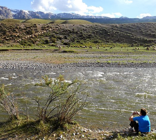 Miri blickt auf den Vieh-Verkehr am Song-Köl-Fluss, Kirgistan