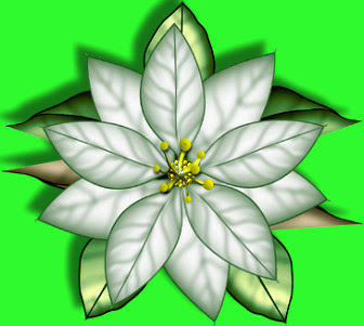 Glowing WhtePonsettia~GreenLeaves.jpg