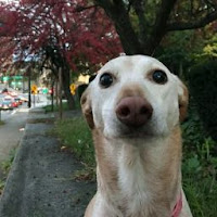 baconboi's avatar